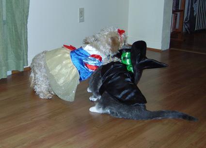 Halloween-Tackle
