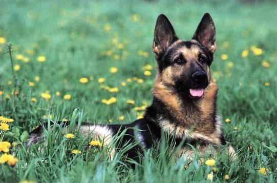 Happydog_2