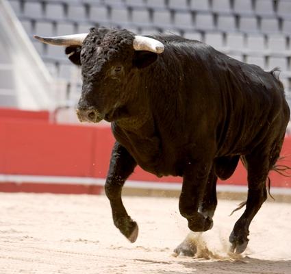 710_bull