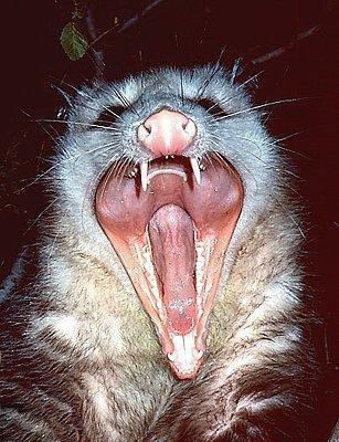 Possumhorror